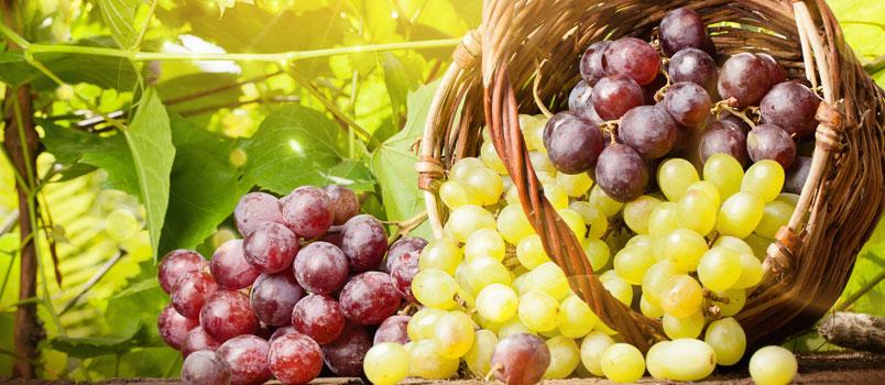 L'estratto di uva efficace contro i tumori del colon?