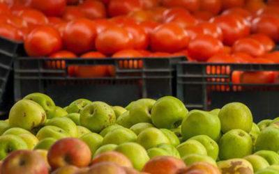 Mele e pomodori potrebbero aiutare a riparare i polmoni danneggiati dal fumo