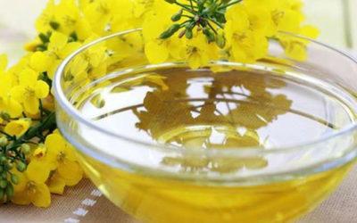 Olio di camelina elisir per ridurre il colesterolo