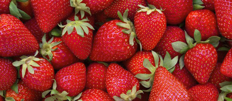 Fragole: alleate della salute dell'intestino